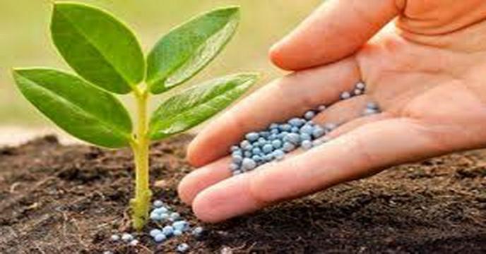 شرکت خدمات حمایتی کشاورزی الگوی منسجم و پویا در تامین و توزیع نهاده های کشاورزی
