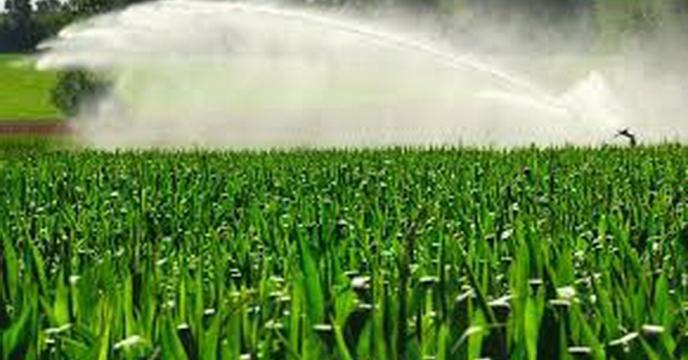 اثر آبیاری تکمیلی بر ارقام جو در شرایط دیم