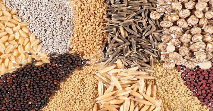 مزایای بذور اصلاحشده و نقش شرکت خدمات حمایتی کشاورزی
