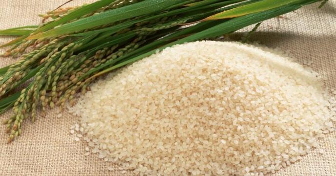 آشنایی با کودهای رایج در کشت برنج