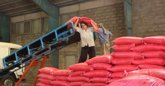 توزیع 35 تن کود نیترات سولفات در شهرستان رودسر برای باغات مرکبات