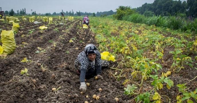 فعالیتهای شاخص کشاورزی خراسان جنوبی