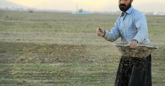 تامین و توزیع کودهای مورد نیاز مزارع گندم شهرستان طبس