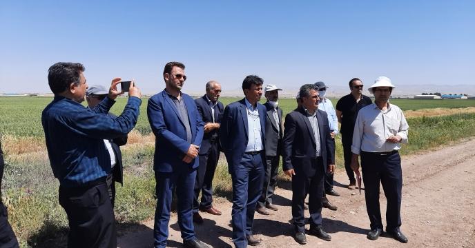 بازدید از طرح پایلوت تغذیه گیاهی استان اردبیل