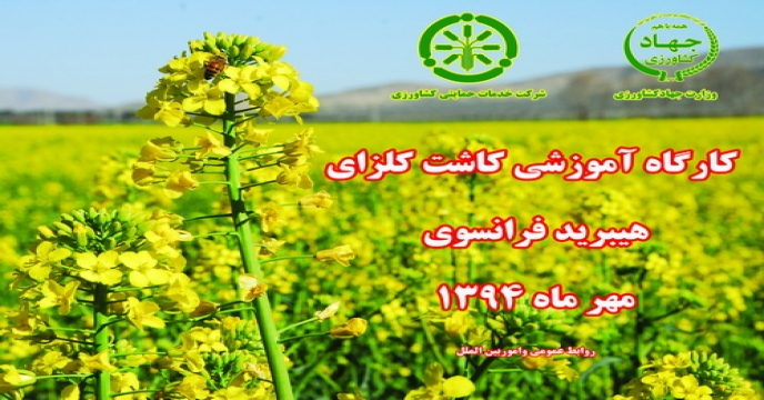 برگزاری کارگاه آموزشی کاشت کلزای هیبرید فرانسوی در استان فارس