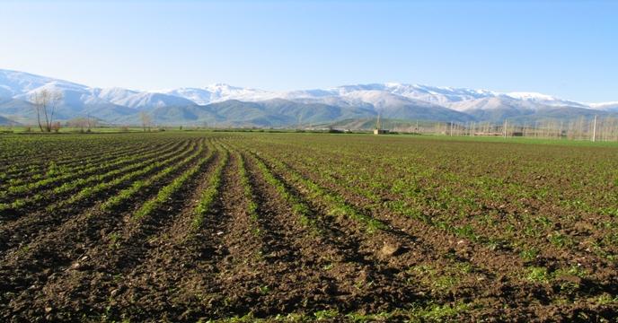 ارزش صادرات کشاورزی در ۷ ماه امسال به ۳ میلیارد دلار رسید/ پیشبینی تولید ۱۱۰ میلیون تن
