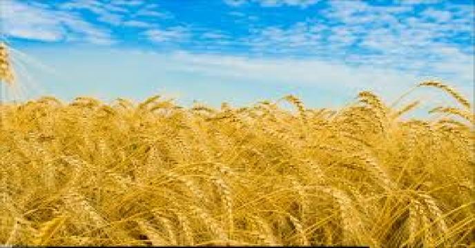 دستیابی به خودکفایی ۸۵ درصدی تولید گندم/ وابستگی به واردات روغن یک سرشکستگی تاریخی است