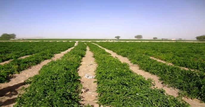 کیفیت کود داخلی با افزایش نظارت بهتر میشود/خاک صادر نمیشود