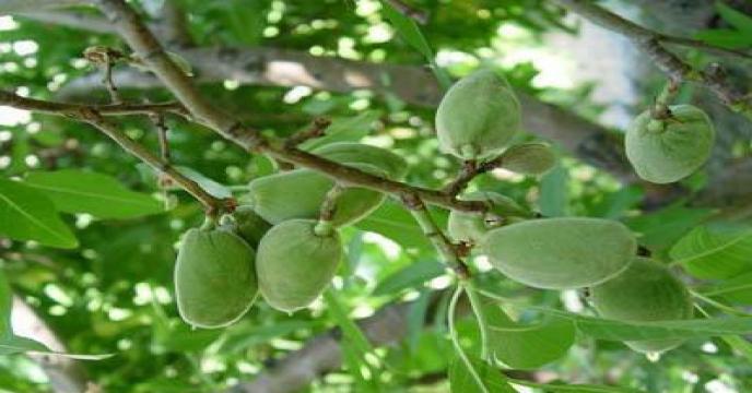 سامانه جامع پایش عوامل خسارت زای گیاهی تا پایان امسال رونمایی می شود