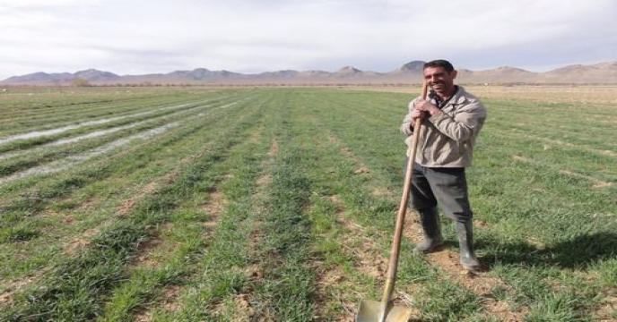 معرفی کشاورزان نمونه کشوری/ تولید ۶۰ درصد انرژی از محصولات کشاورزی