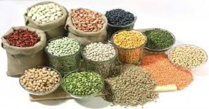 ایران متقاضی واردات دانههای روغنی، چوب و غلات از روسیه