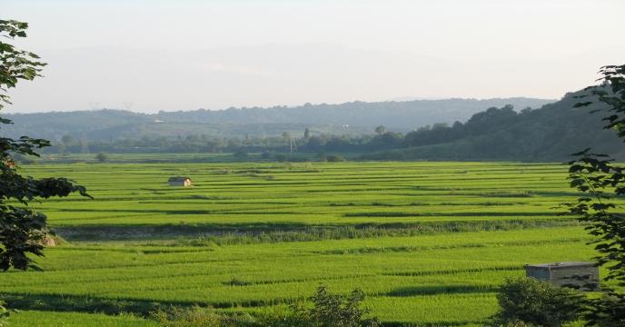 همایش پیمانکاران تولید بذر استان سمنان برگزار شد.