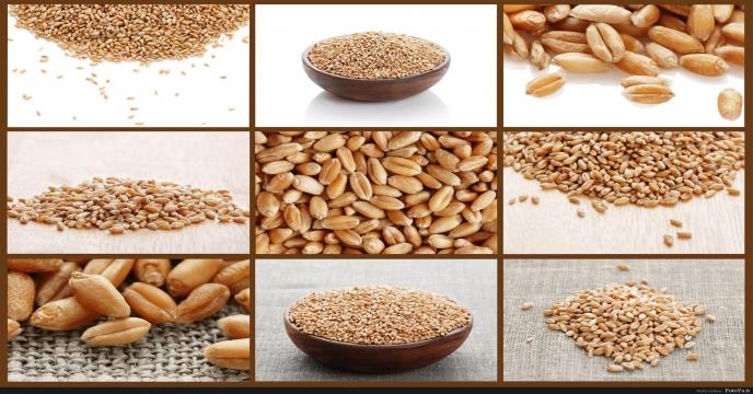 ایران؛ تاثیر گذار در کاهش تجارت جهانی گندم و ذرت و افزایش تجارت برنج در سال 2016
