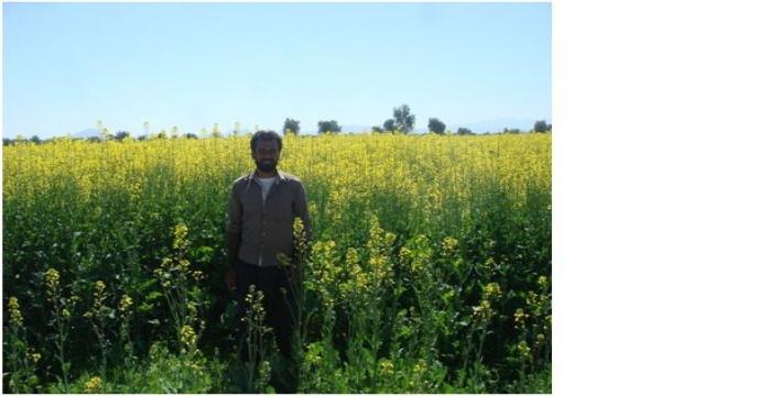 گزارش تصویری بازدید از مزارع کلزا