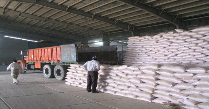 تامین و توزیع 300 هزار کیلوگرم بذر شلتوک برنج در مازندران