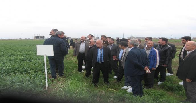 برگزاری كارگاه آموزشی كلزا در استان آذربايجان شرقی