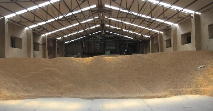 خرید بیش از 3500 تن ارقام بذری گندم و جو در استان مازندران