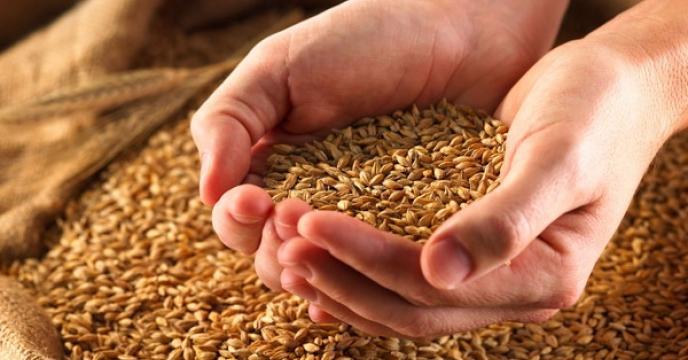 توسعه تنوع بذری در استان چهارمحال و بختياری