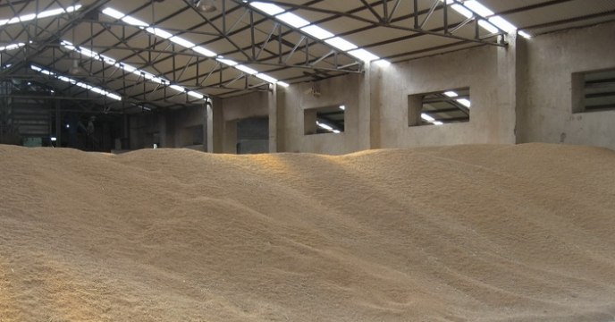 خرید بیش از 3 میلیون و 500 هزار کیلوگرم گندم بذری در مازندران