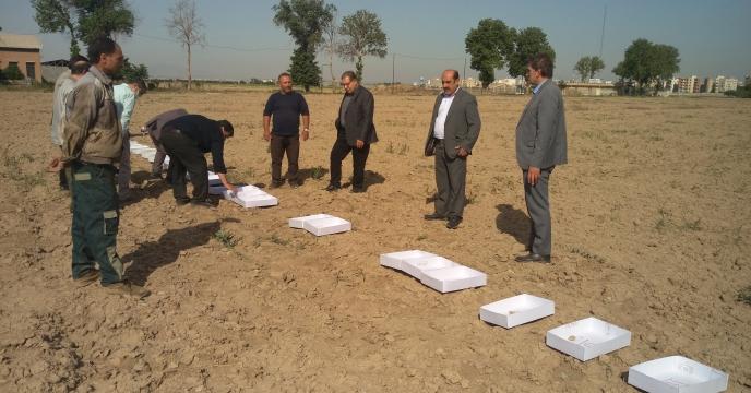 تخلیه کود اوره فله در انبارهای ذخیره شرکت خدمات حمایتی کشاورزی استان لرستان