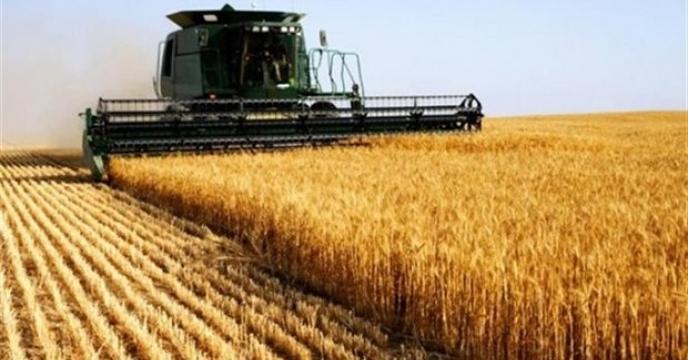 استان البرز خودکفا در تولید بذر گندم
