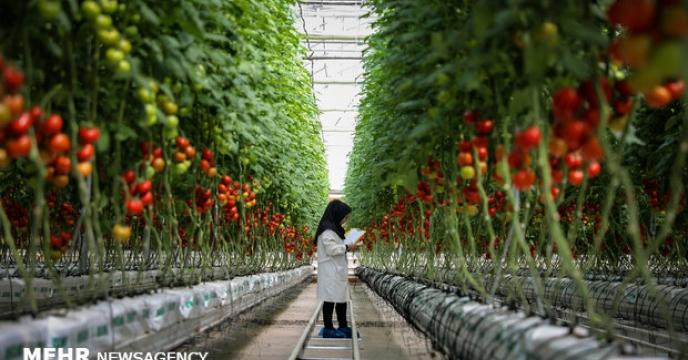پروانه استاندارد محصول گواهی شده کشاورزی در البرز رونمایی شد