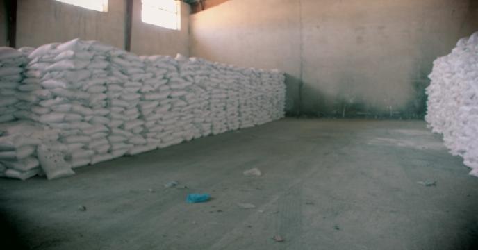 افزایش ۱۵ درصدی تولید کلزا در استان ایلام