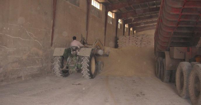 توزیع کود سوپرفسفات تریپل درشهرستان  دره شهر