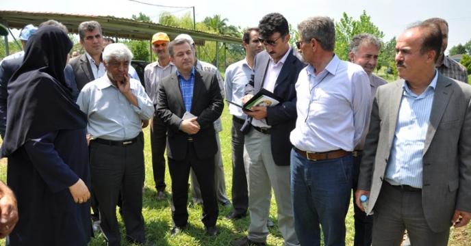 بازدید معاون وزیر  جهاد کشاورزی از مزارع الیت و سوپر الیت و ارقام جدید