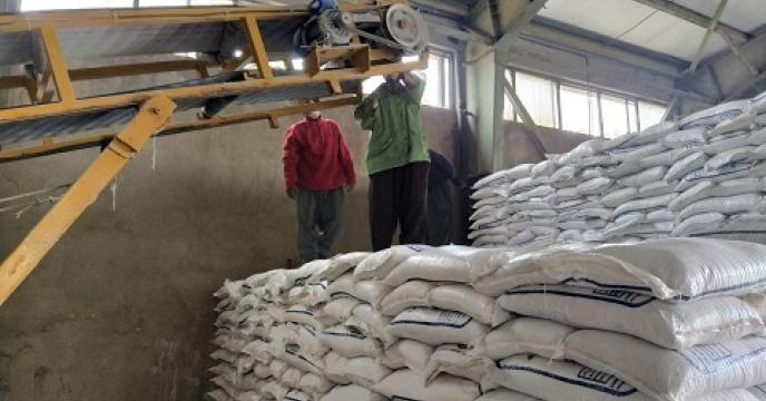 حمل و توزیع کود در شهرستان بیجار