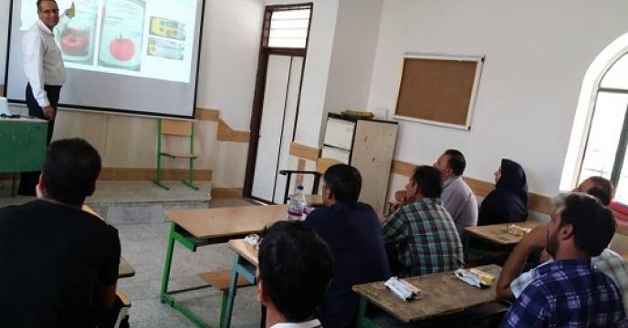 برگزاری دوره آموزشی کشت گوجه فرنگی در منطقه پدل - بندر لنگه