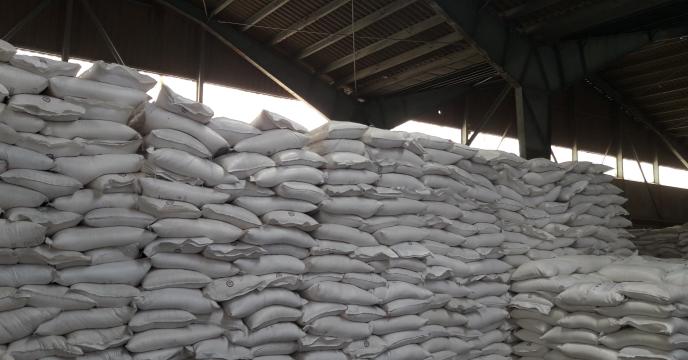 تامین کود مزارع گندم در شهرستان کاشان