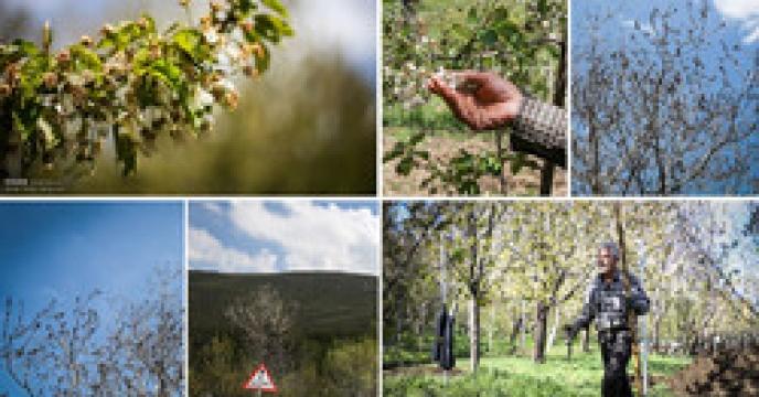 سطح زیر کشت باغات میوه در شهرستان طالقان
