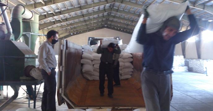 توزیع کود سوپرفسفات تریپل در شهرستان لارستان شهریور ماه سال جاری