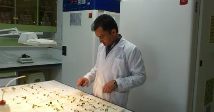آزمون قوه نامیه و وزن هزار دانه 39 نمونه بذور در دی ماه98