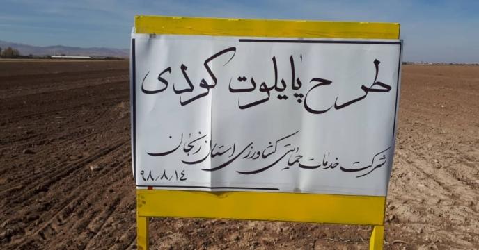 عملیات کاشت مزرعه گندم طرح الگویی پایلوت تغذیه گیاهی استان  زنجان