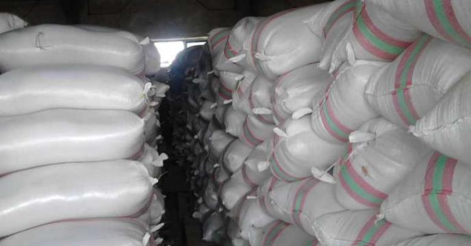 ادامه روند خرید بذر گواهی شده برنج در استان گیلان