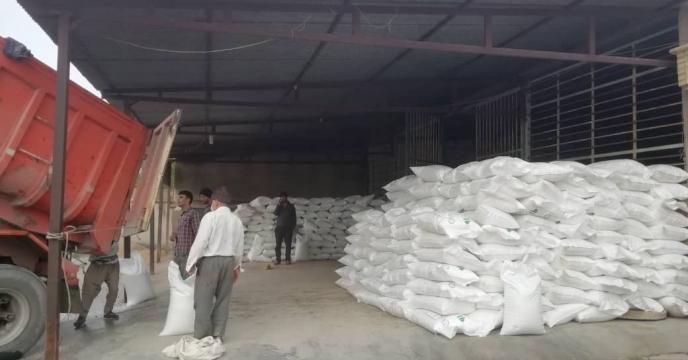 تأمین ۴۶ تن کود شیمیایی اوره در شهر خورموج مرکز شهرستان دشتی