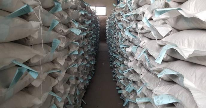 پایان عملیات بوجاری وپروسس بذر اصلاح و گواهی شده برنج در سایت بذرشرکت خدمات حمایتی کشاورزی استان گیلان