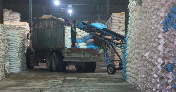 عملیات برداشت گندم مزرعه پایلوت تغذیه کودی استان همدان