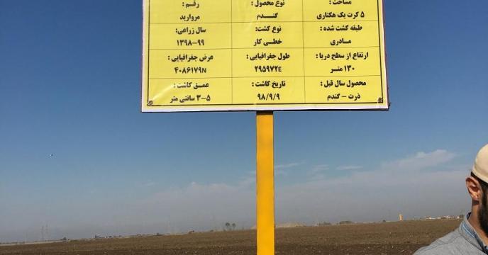 اجرای مرحله کاشت مزرعه  منتخب طرح الگویی پایلوت تغذیه گیاهی استان گلستان