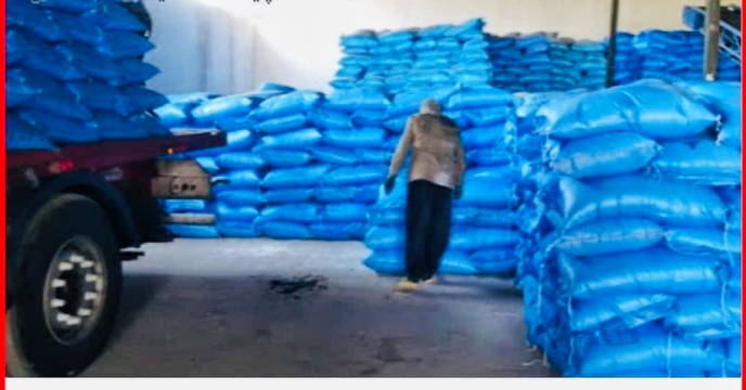 تأمین کود شیمیائی ازته مورد نیاز مزارع گندم و جو در شهرستان مرودشت استان فارس