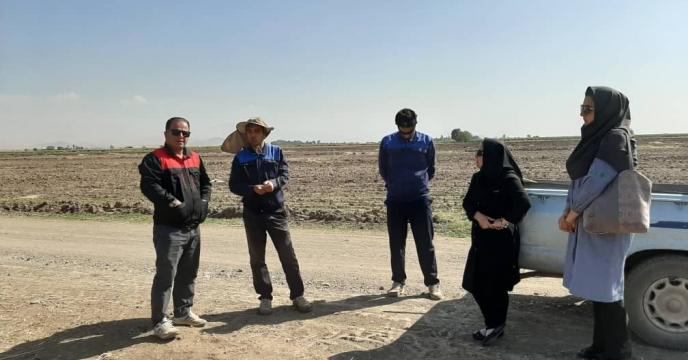 از مزرعه 15 هکتاری منتخب جهت پایلوت تغذیه گیاهی در استان قزوین مجدداً نمونه برداری شد