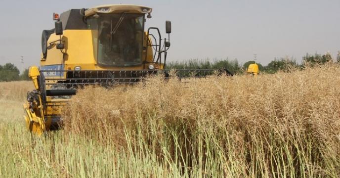 تحویل ۹۲۰ تن دانه روغنی کلزا به مراکز خرید در البرز