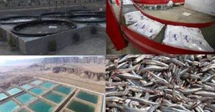 توزیع 1014 تن کود برای مصارف مزارع آبندان، پرورش ماهیان گرمابی و میگو در استان گلستان