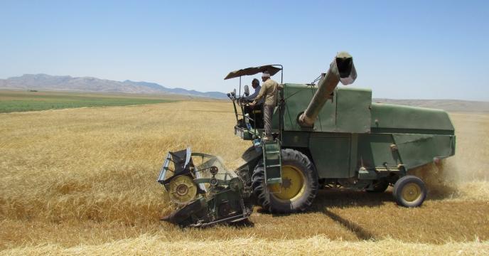 پیش بینی تولید 117 هرارتن گندم در استان سمنان