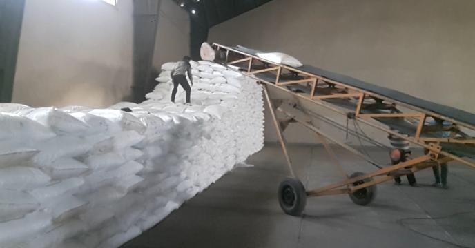 توزیع 44 تن کود سولفات پتاسیم گرانوله در شهرستان ساوجبلاغ