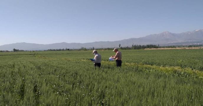 بازدید از مزرعه طرح پایلوت تغذیه کودی استان آذربایجان شرقی
