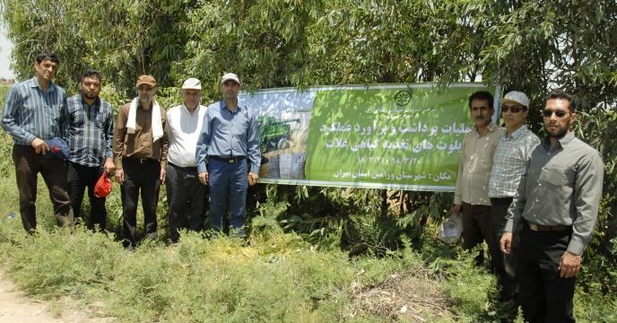 عملیات برداشت و برآورد عملکرد پایلوت تغذیه گیاهی شهرستان ورامین