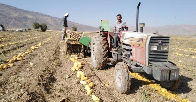 دشت بکان قطب تولید کدو آجیلی در اقلید  استان فارس است